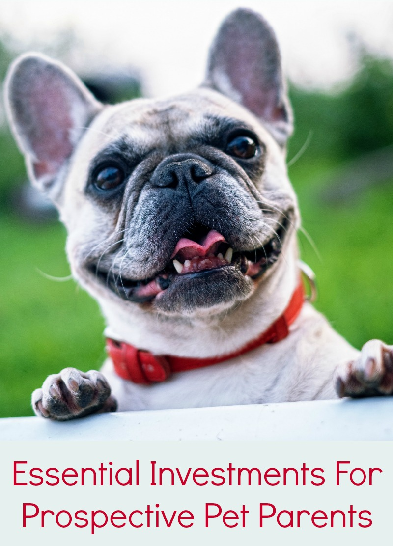 Essential Investments For Prospective Pet Parents