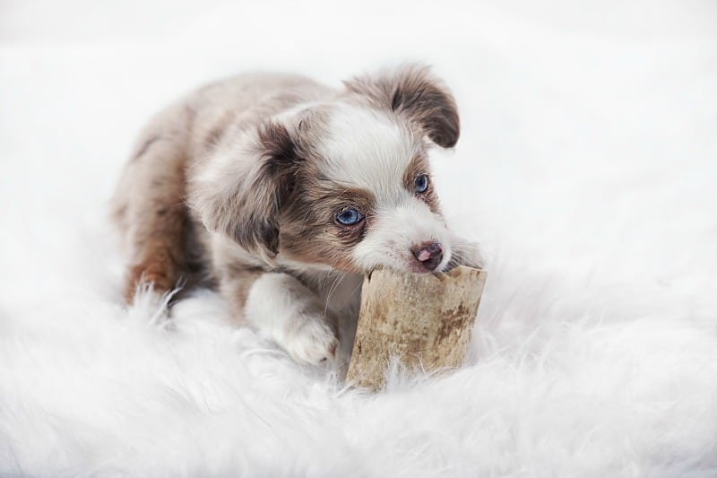 How Much Do You Know About Puppy CBD?