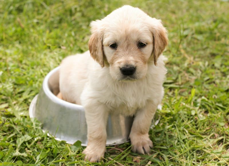 Prepping For A New Furry Friend: A Checklist For Owners