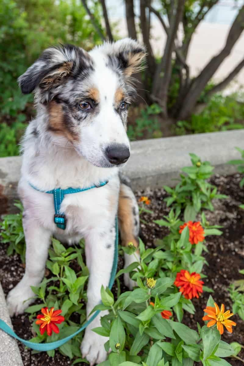 What Common Plants are Poisonous for Dogs?