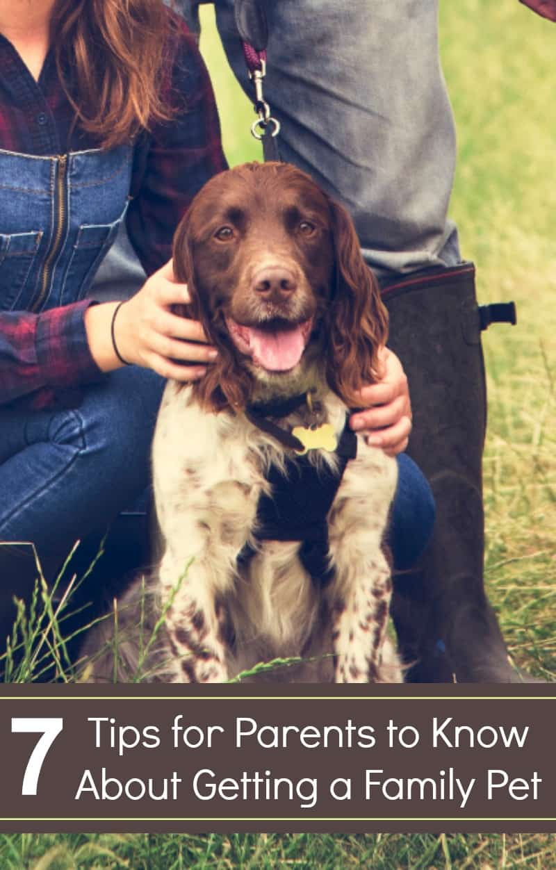 7 Tips for Parents to Know About Getting a Family Pet