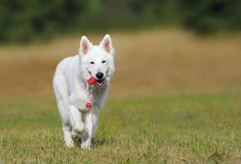 8 Dog Training Mistakes You Don't Know You're Making