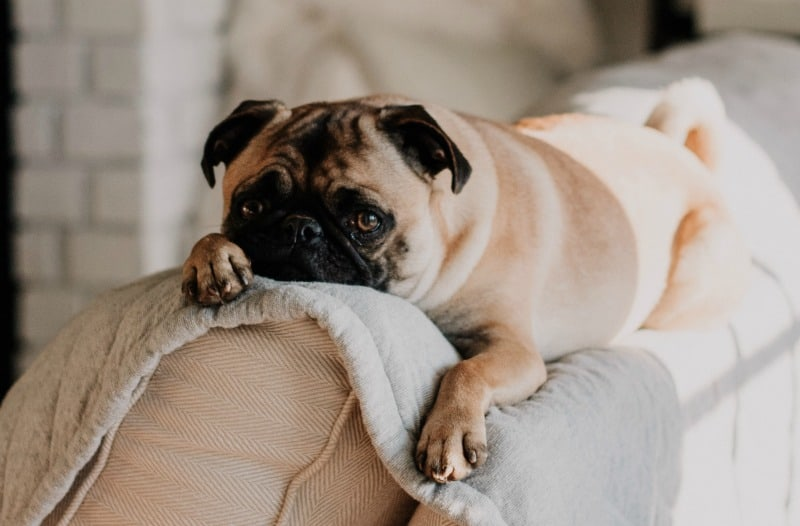 A Complete Guide To Keeping Your Pet Safe While You're Away