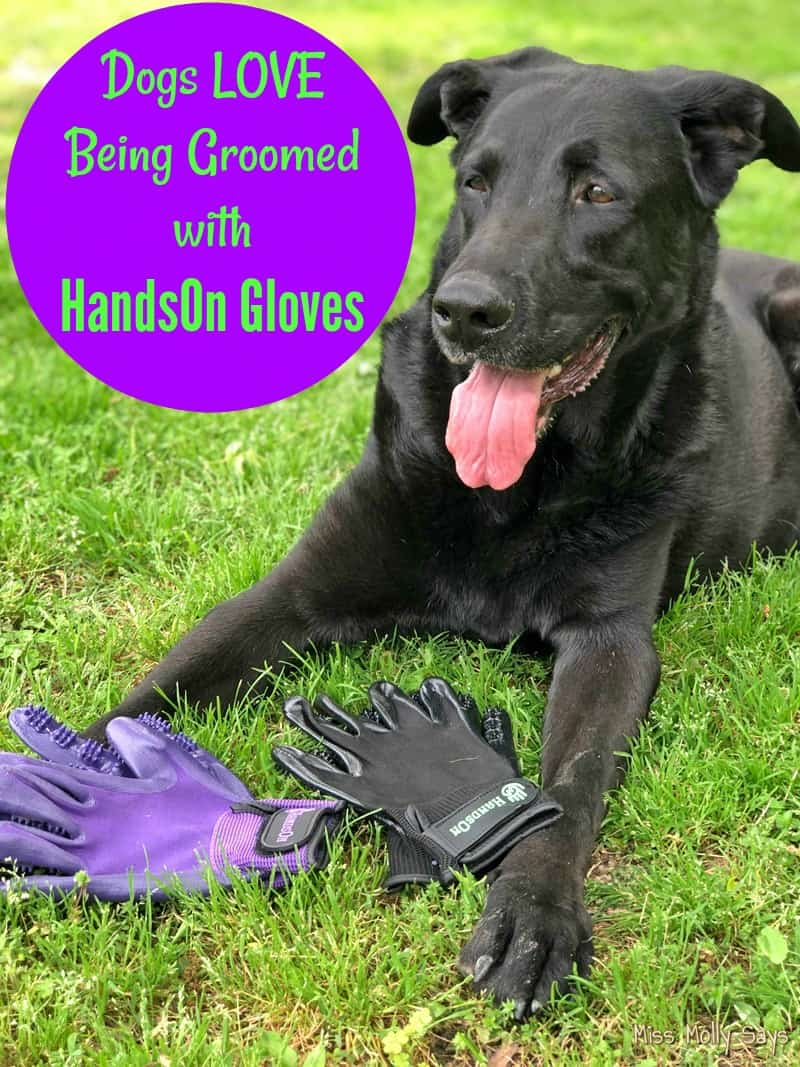Dogs LOVE Being Groomed with HandsOn Gloves