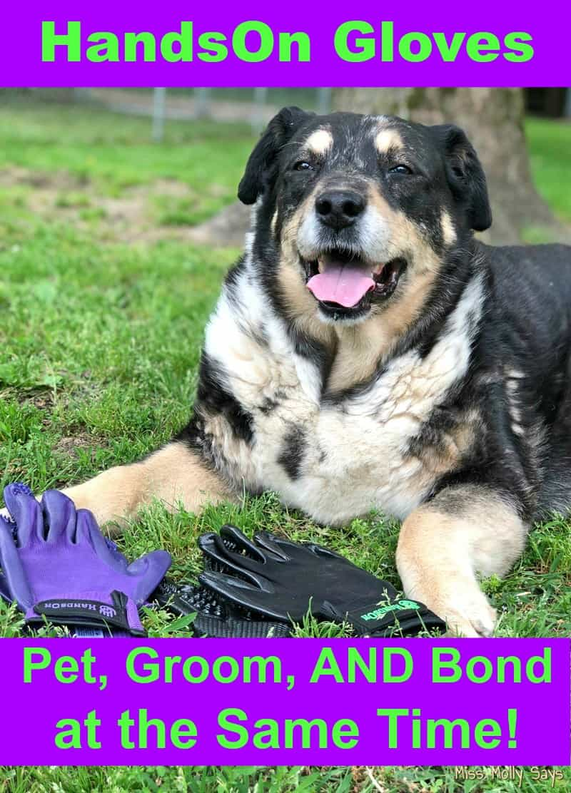 Hands On Gloves: Pet, Groom, AND Bond at the Same Time