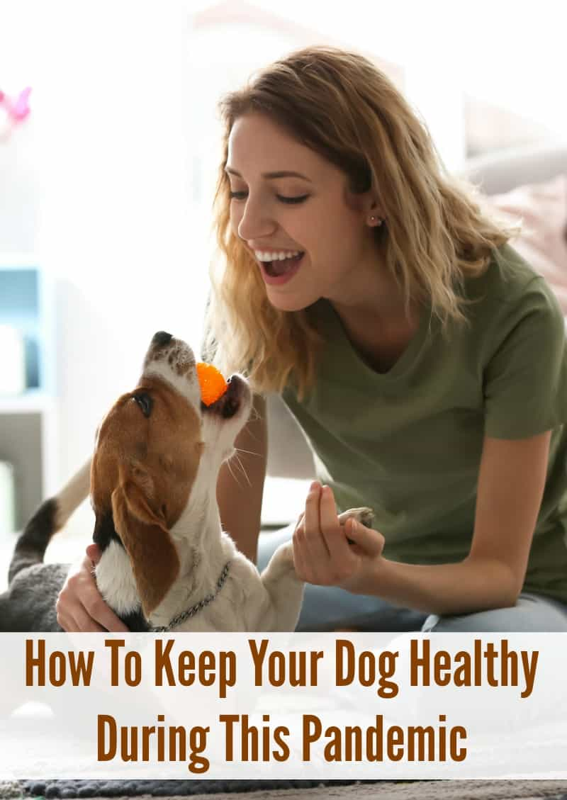 How To Keep Your Dog Healthy During This Pandemic
