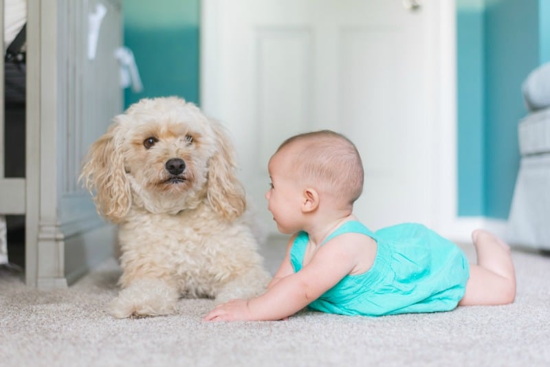 The Best Cleaning Products to Use That are Pet Safe