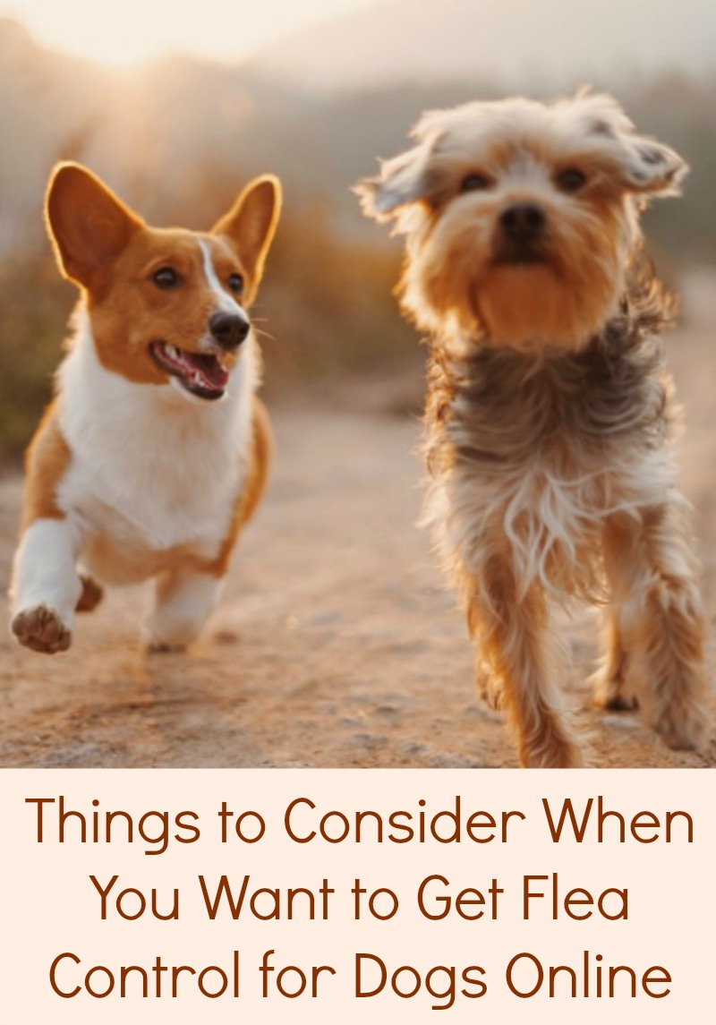 Things to Consider When You Want to Get Flea Control for Dogs Online