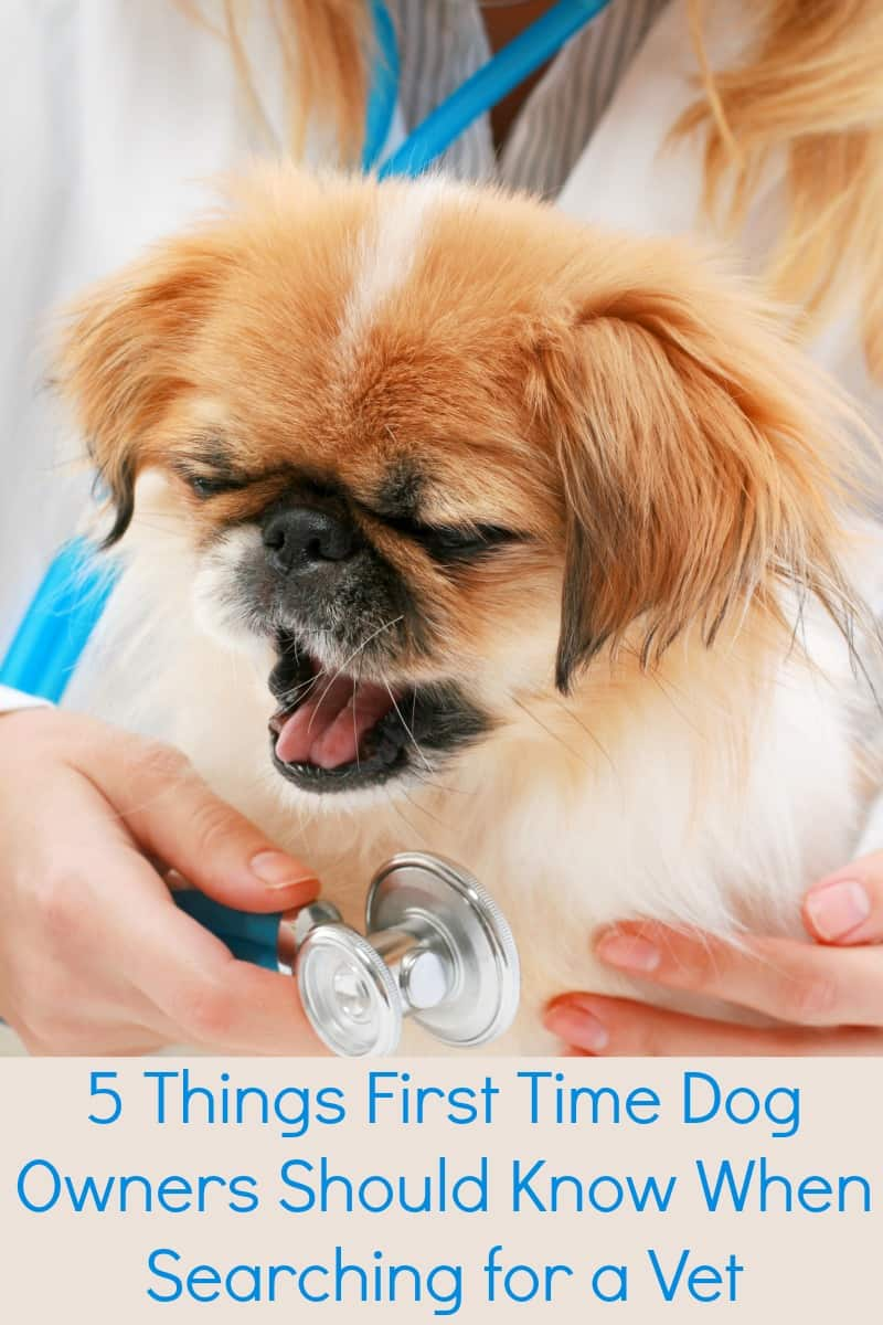 5 Things First Time Dog Owners Should Know When Searching for a Vet