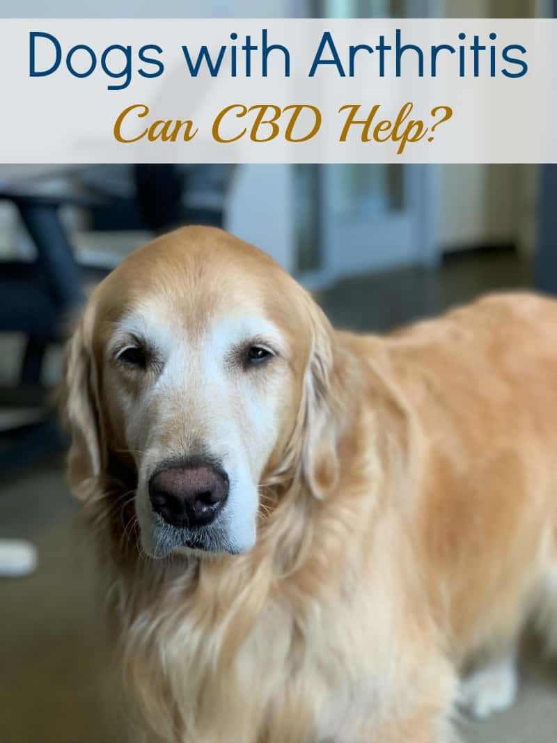 Dogs with Arthritis: Can CBD Help?