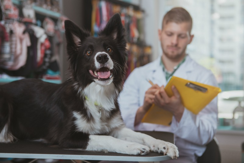 How To Choose The Best Vitamins For Your Dogs