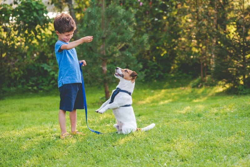 The Most Important Things To Know With Puppy Training