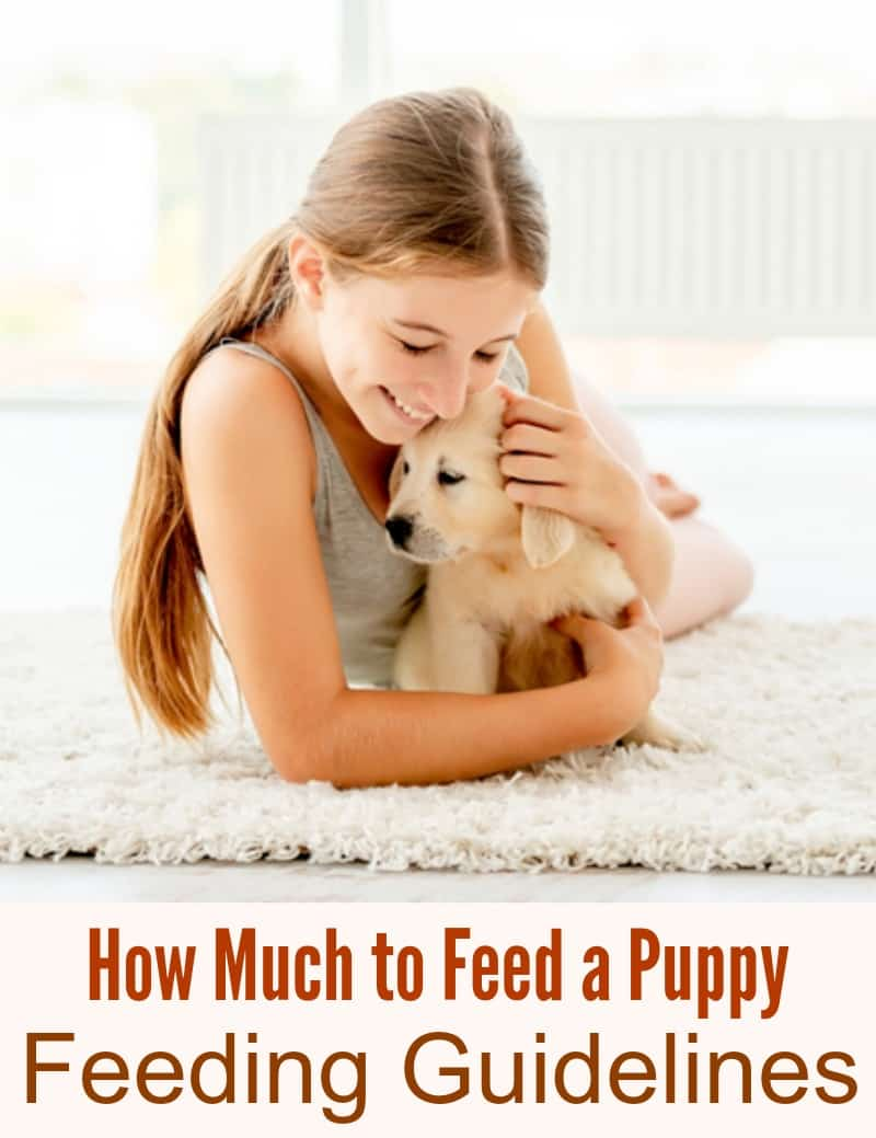How Much to Feed a Puppy - Feeding Guidelines