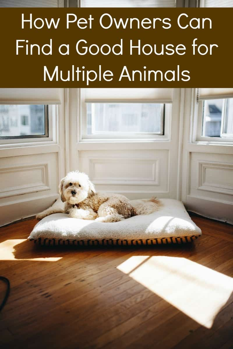 How Pet Owners Can Find a Good House for Multiple Animals