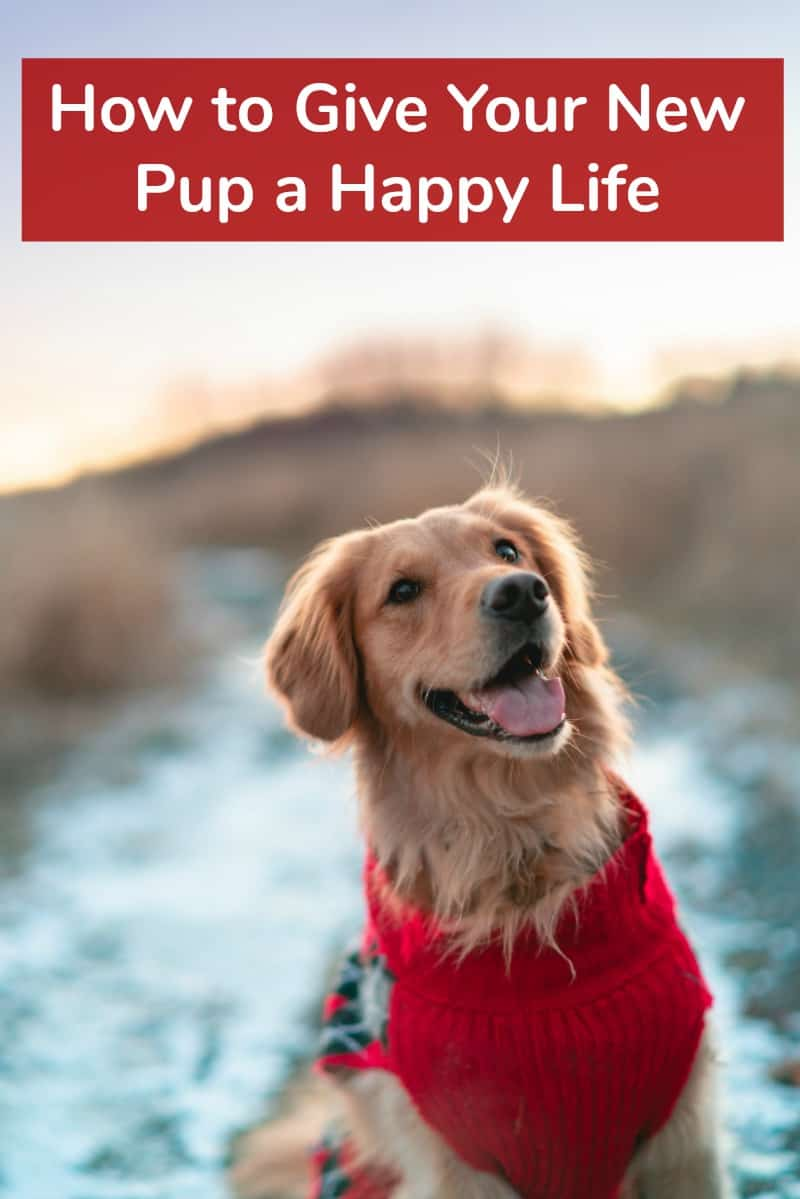 How to Give Your New Pup a Happy Life