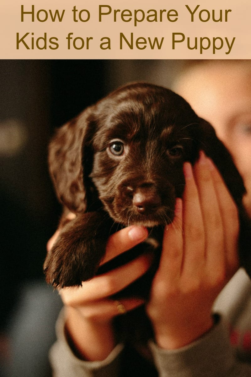 How to Prepare Your Kids for a New Puppy