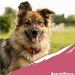 Avoiding Common Summer Dangers for Pets