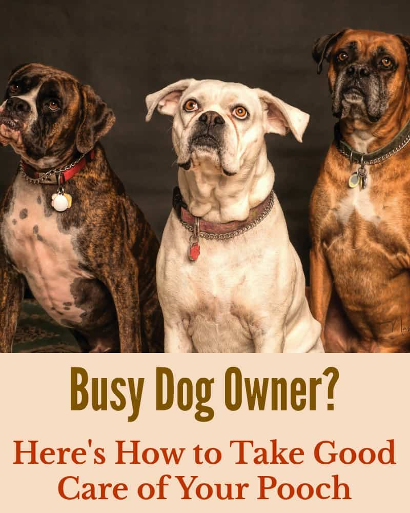 Busy Dog Owner? Here's How to Take Good Care of Your Pooch