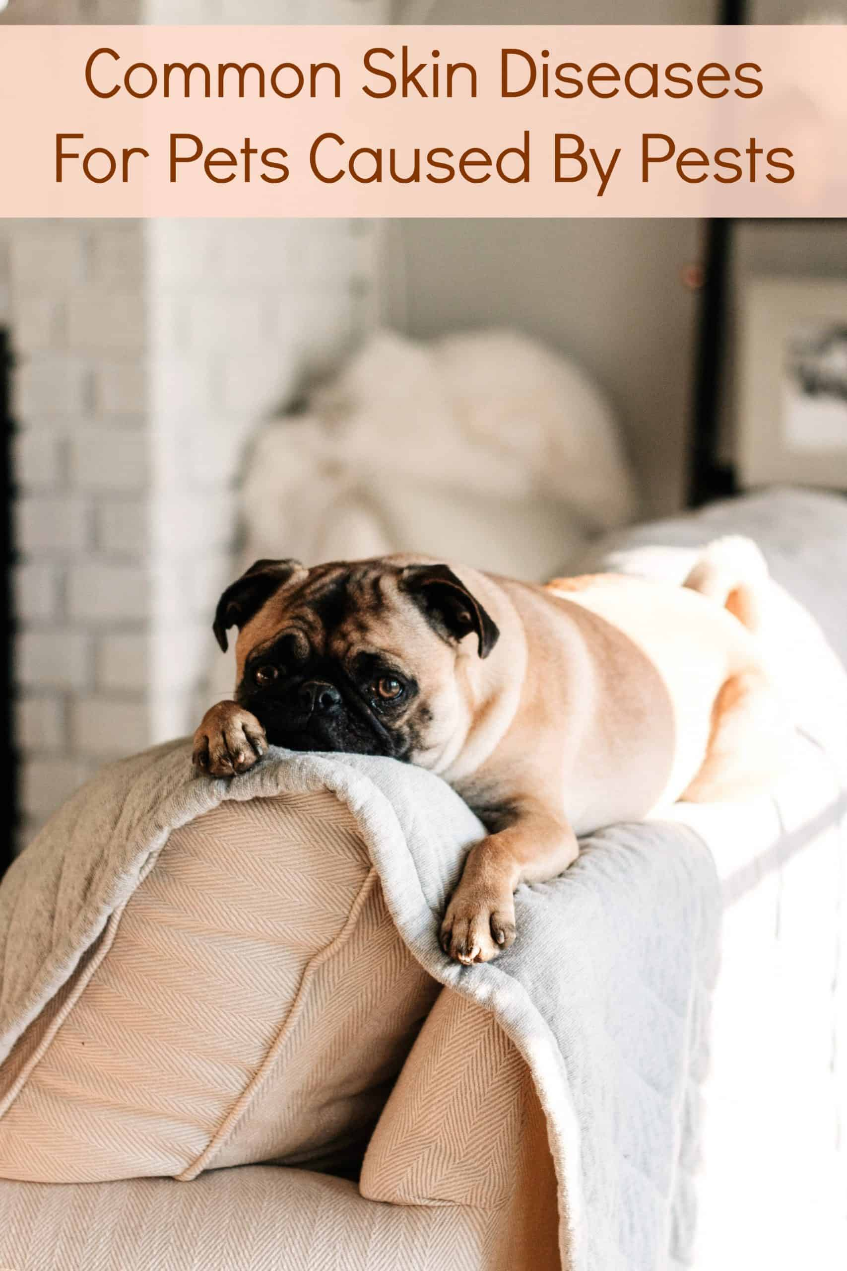 Common Skin Diseases For Pets Caused By Pests