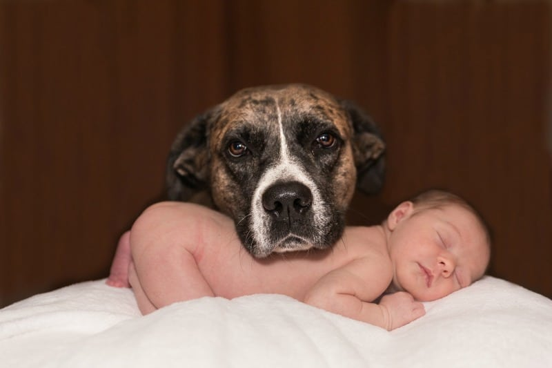 How to Prepare for Your Newborn Baby and Your Pet