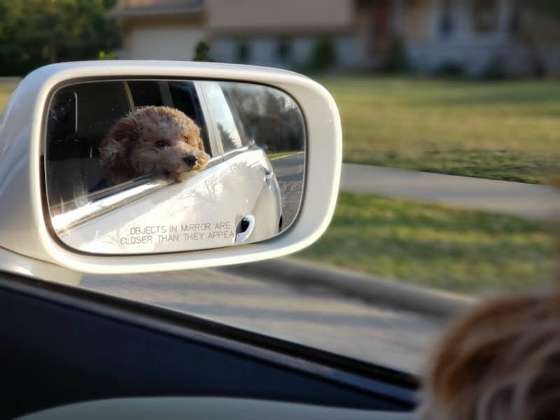 Tips for Transporting Your Pets in a Car Safely and Humanely