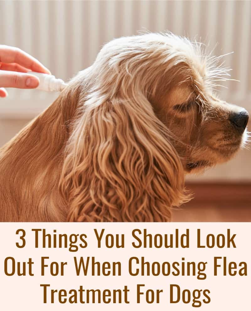 3 Things You Should Look Out For When Choosing Flea Treatment For Dogs