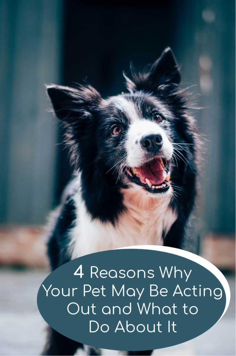4 Reasons Why Your Pet May Be Acting Out and What to Do About It
