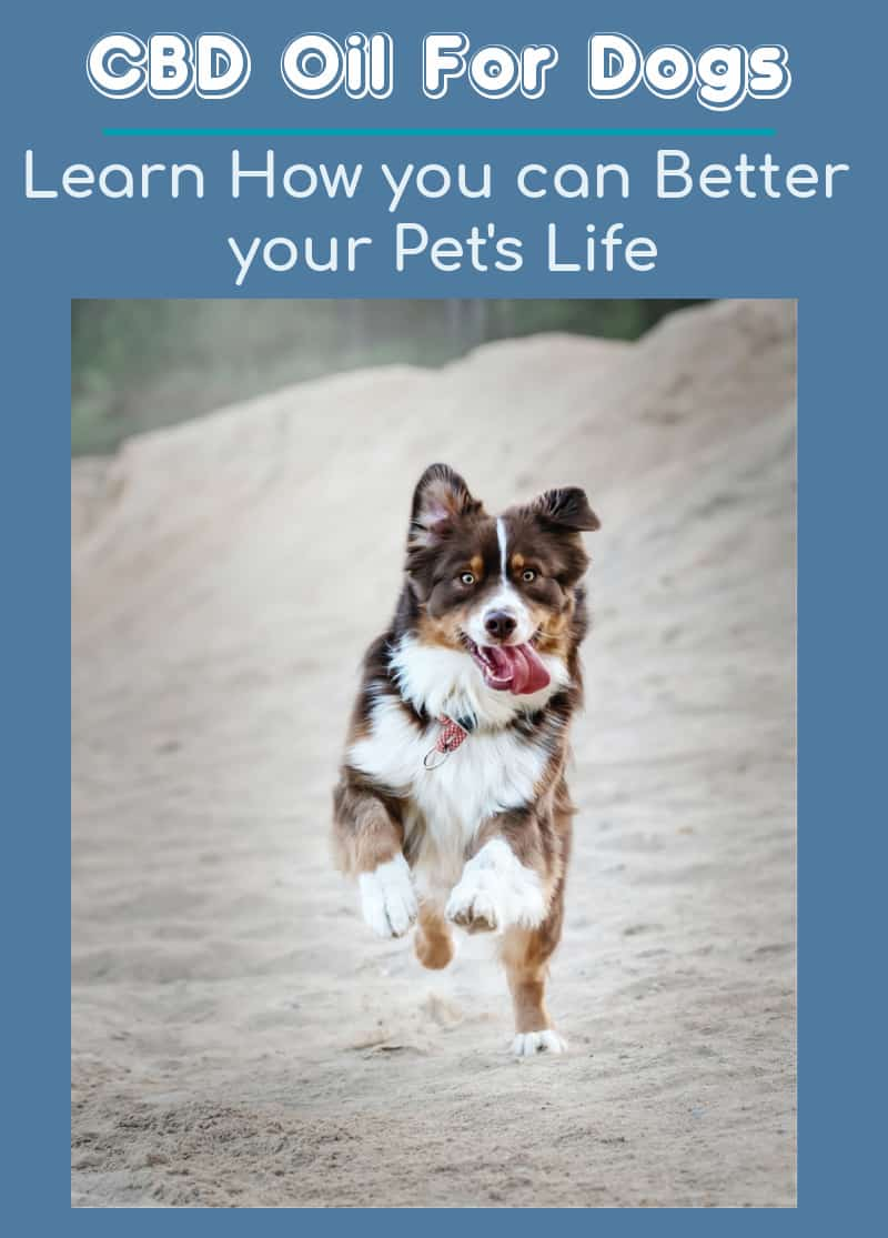 CBD Oil For Dogs: Learn How you can Better your Pet's Life