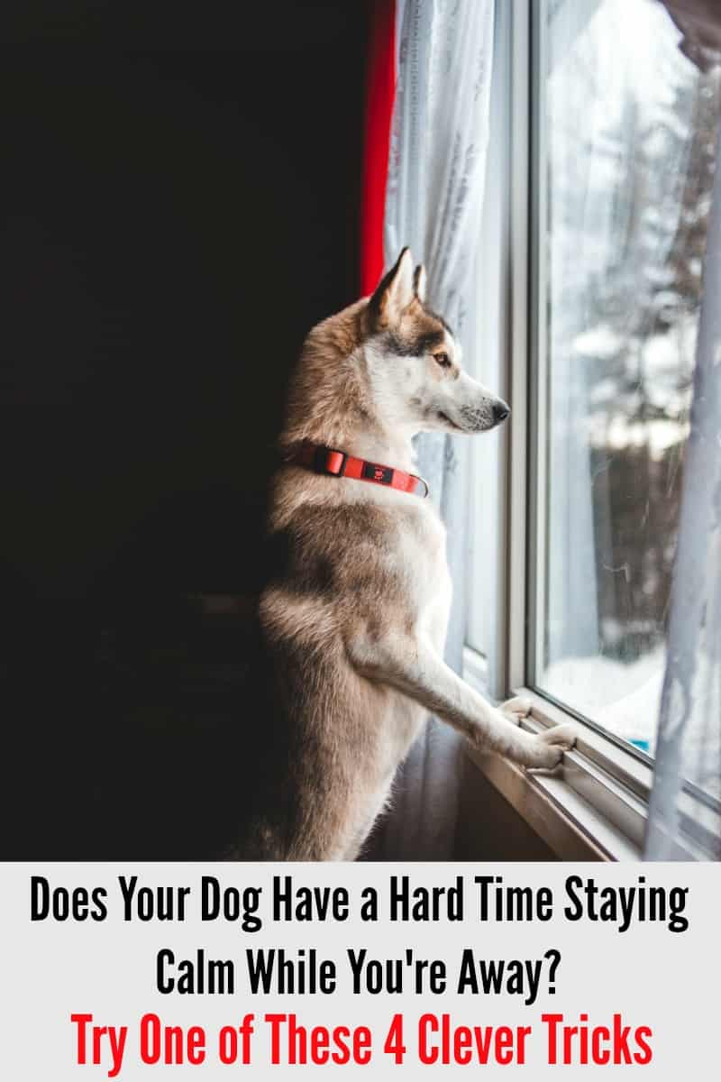Does Your Dog Have a Hard Time Staying Calm While You're Away? Try One of These 4 Clever Tricks