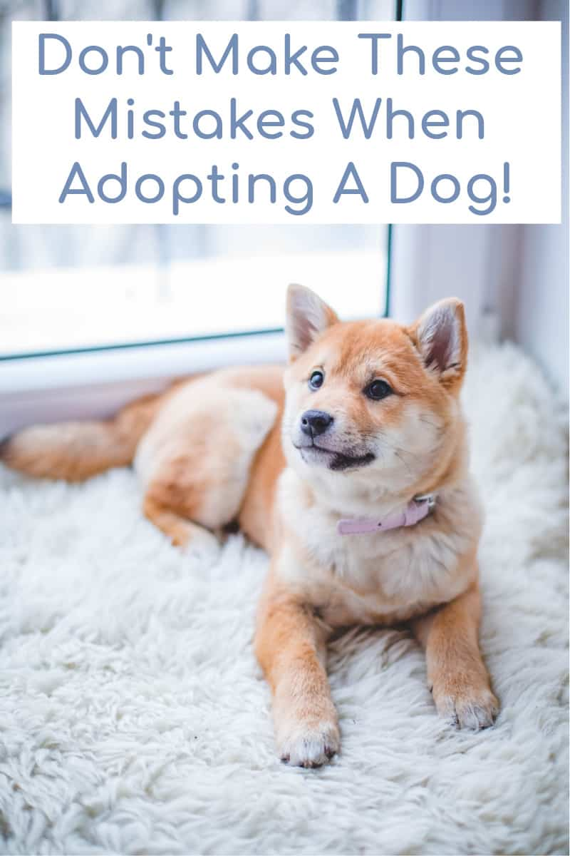 Don't Make These Mistakes When Adopting A Dog!