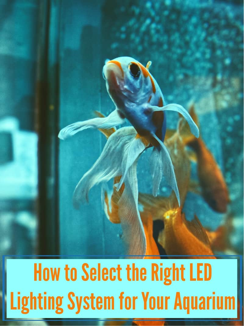 How to Select the Right LED Lighting System for Your Aquarium