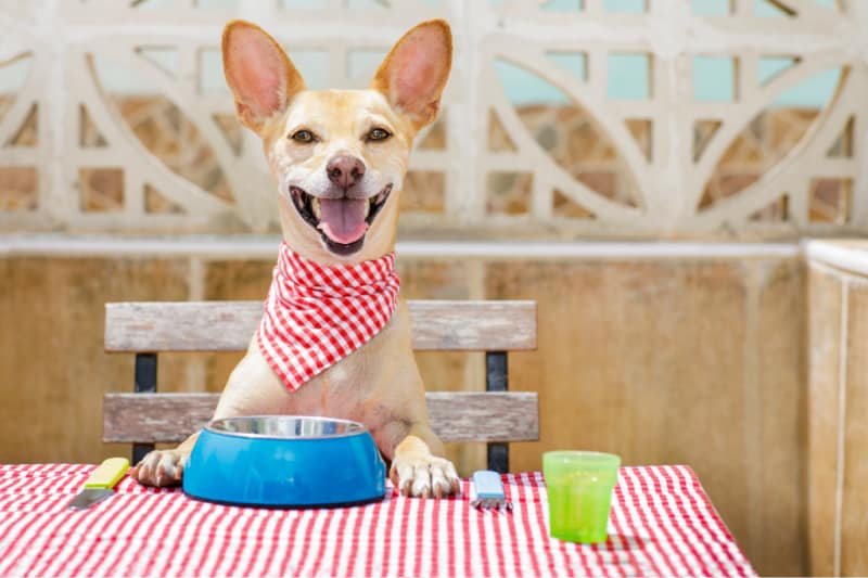 Types of Food and Treats to Feed Your Dog for Optimal Health