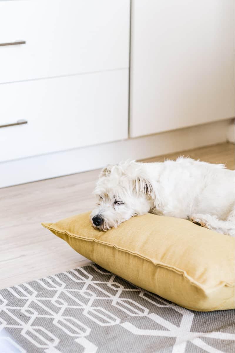 White dog laying on yellow cushion on floor