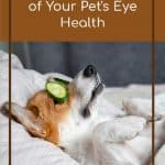 How to Take Care of Your Pet's Eye Health