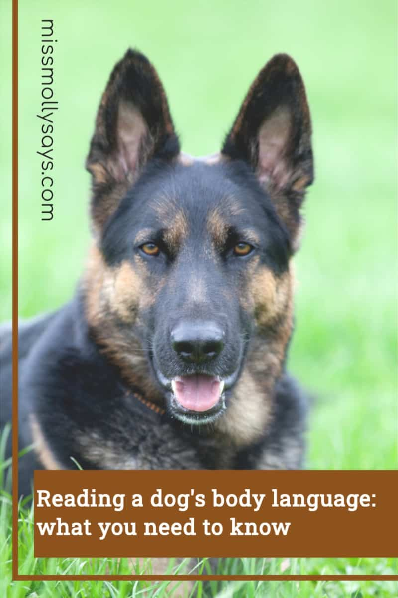 Reading a dog's body language: what you need to know
