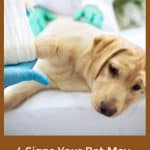 4 Signs Your Pet May Be Suffering From Pain