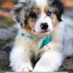 How Ginger Can Be Healthy For Your Pup