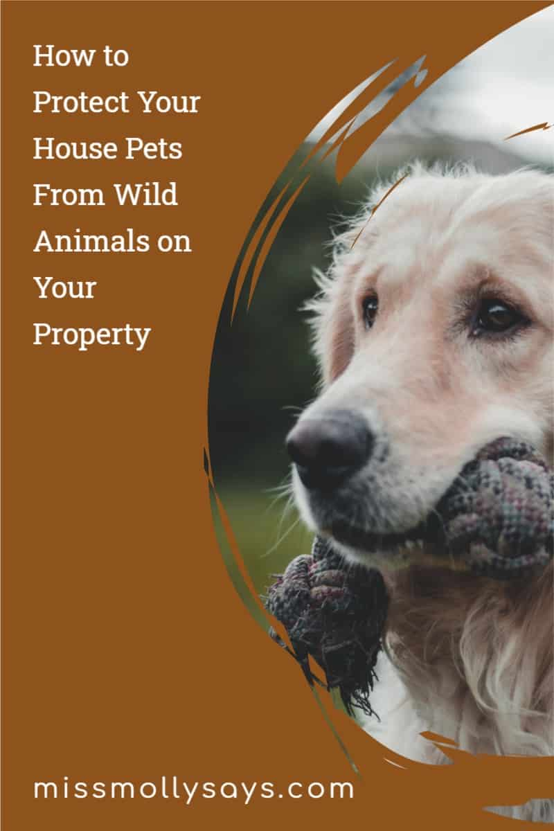 How to Protect Your House Pets From Wild Animals on Your Property