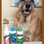 Doggie Spa Day with Oakwood Pet Products