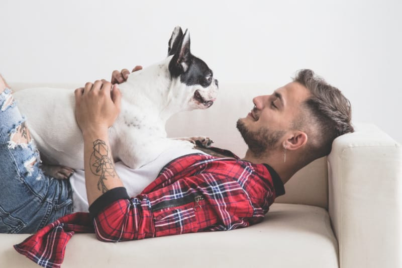 French Bulldog laying on top of man in plaid shirt on white sofa