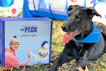 Dog Lovers Will LOVE The Pack on Amazon Prime Video! #PackedWeekend