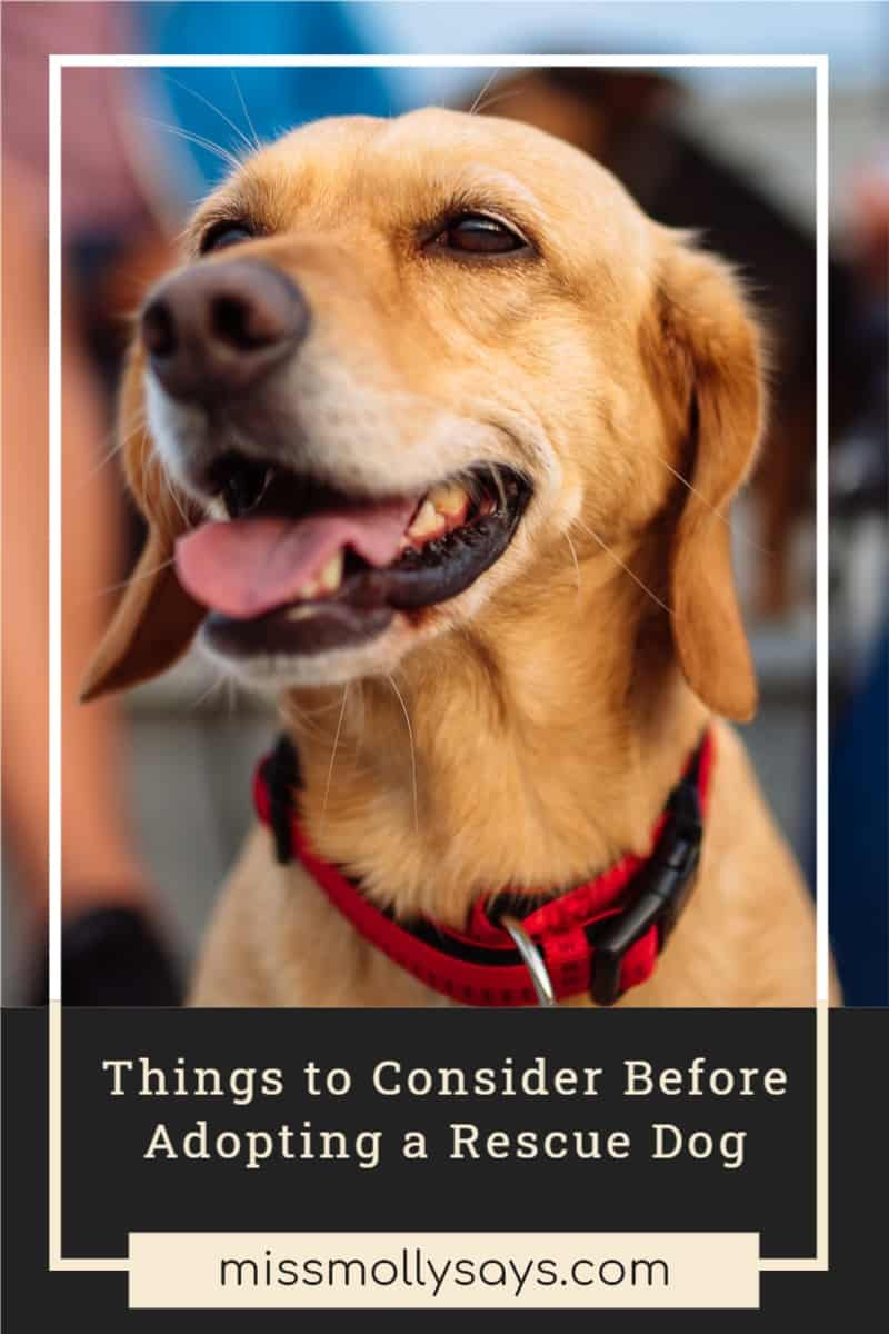 Things to Consider Before Adopting a Rescue Dog