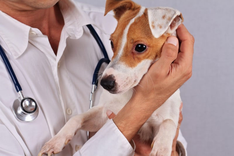 Causes of Rashes in Dogs