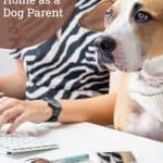 How to Work From Home as a Dog Parent