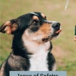 Issue of Safety: CBD for Your Pets