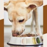 Main Ingredients Every Dog Food Should Include