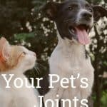 Your Pet's Joints: What You Need to Look For and How to Take Care of Them