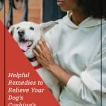 Helpful Remedies to Relieve Your Dog's Cushing's Disease Symptoms