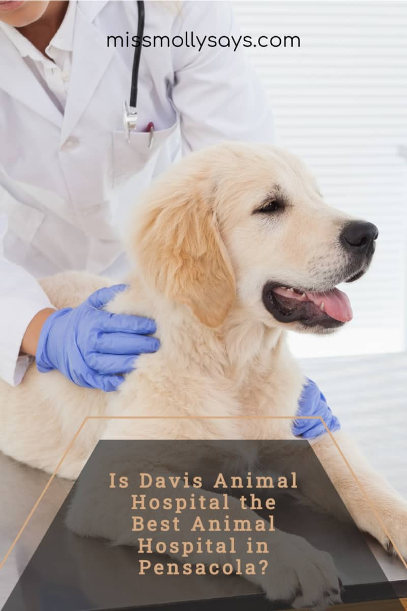 Is Davis Animal Hospital the Best Animal Hospital in Pensacola?