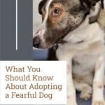 What You Should Know About Adopting a Fearful Dog